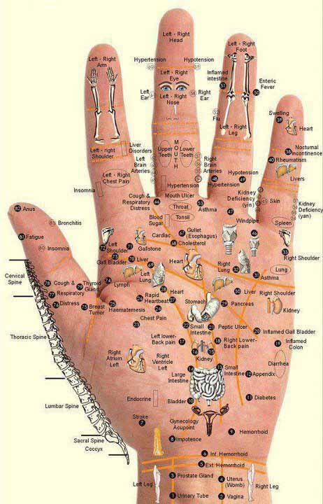 spieren en zenuwen van menselijke lichaam